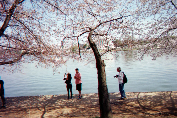 Taking pictures of the cherry trees around the Tidal Basin in Washington, D.C.