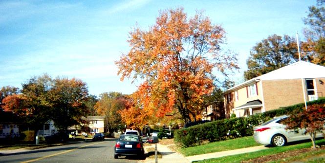 Autumn scene of a tree.