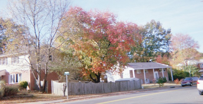 Autumn trees with leaves changing colors.