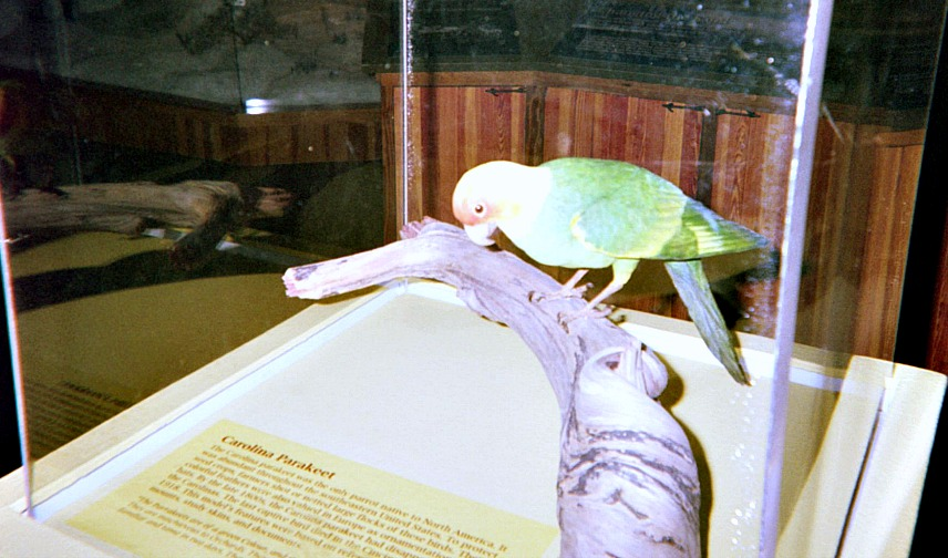 Education resource tools can include museum exhibits like this one on the extinct Carolina Parakeet.