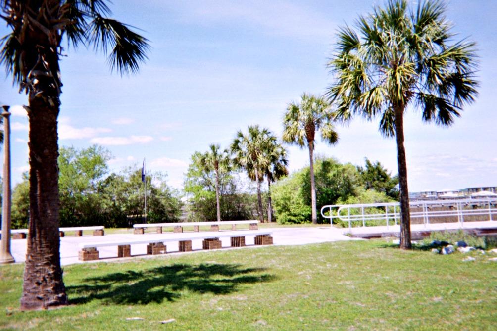Palmetto trees.